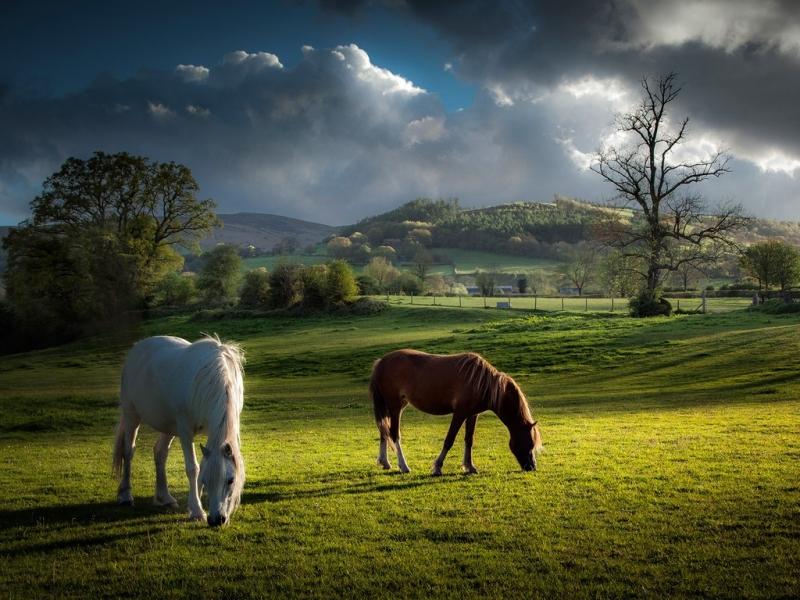 Vườn Quốc gia Brecon Beacons: Wales