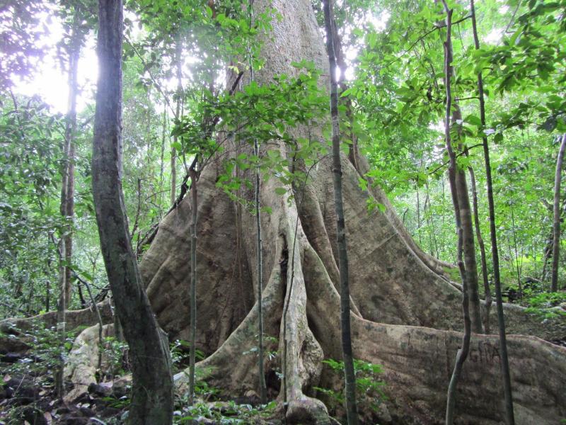 Vườn quốc gia Cát Tiên (Đồng Nai)