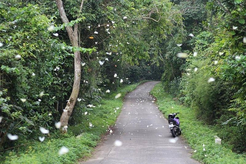 Lạc lối giữa rừng bướm tại Vườn quốc gia Cúc Phương