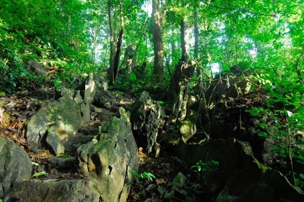 Đặc trưng của Cúc Phương là rừng mưa nhiệt đới xanh quanh năm, cùng quần thể hệ động- thực vật vô cùng phong phú và đa dạng.