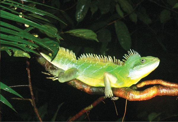 Vườn quốc gia Lò Gò- Xa Mát