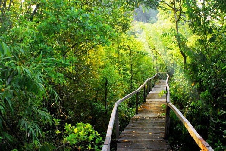 Đây là khu rừng nhiệt đới ẩm ướt  còn lưu giữ nhiều giống loài thực - động vật quý.