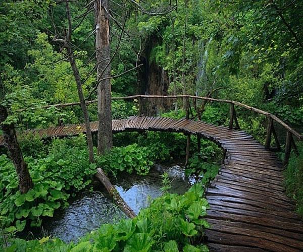 Đây là một trong những Vườn Quốc gia của Nam Bộ còn giữ được nguyên vẹn khu rừng già nguyên sinh.