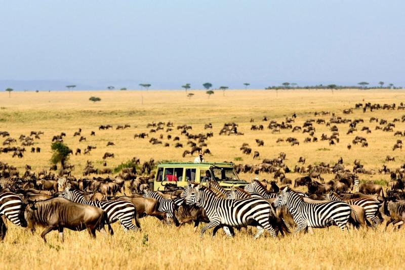 Vườn quốc gia Serengeti (Tanzania)