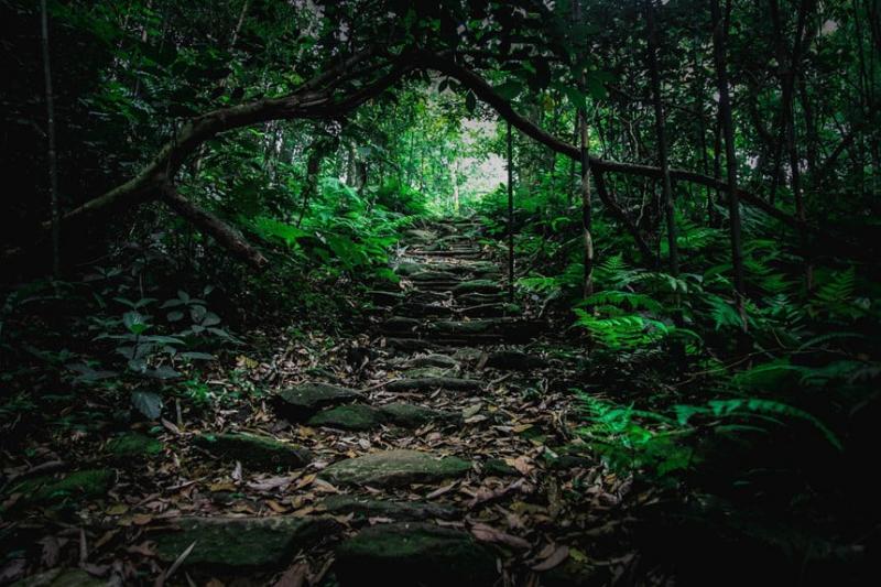 Vườn quốc gia Tam Đảo cũng tồn tại một số kiểu rừng khác như rừng kín thường xanh mưa ẩm á nhiệt đới núi thấp.