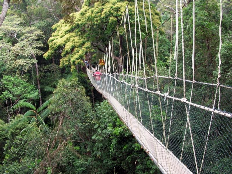 Thăm vườn quốc gia Taman Negara bằng đường dây treoi