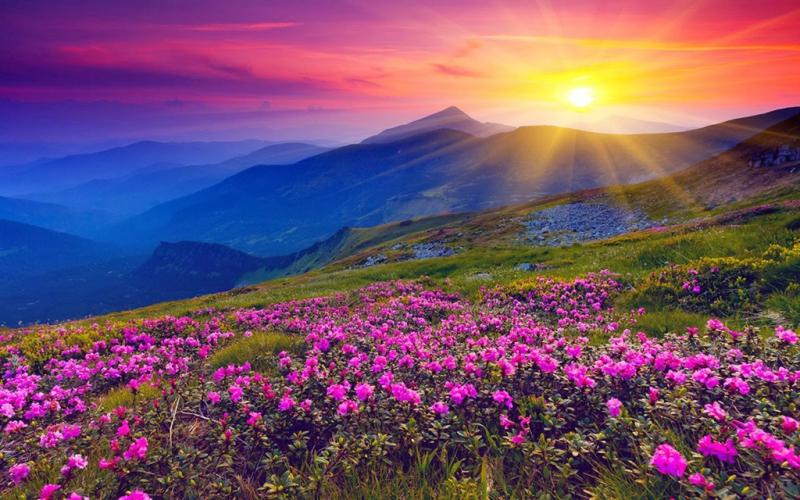 Vườn quốc gia thung lũng các loài hoa, Ấn Độ