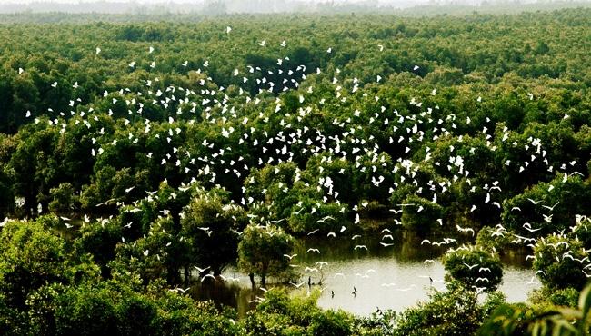 Vườn quốc gia Tràm Chim