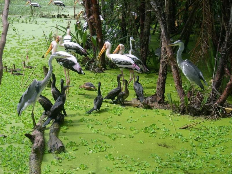 Vườn quốc gia Tràm Chim Tam Nông (Đồng Tháp)