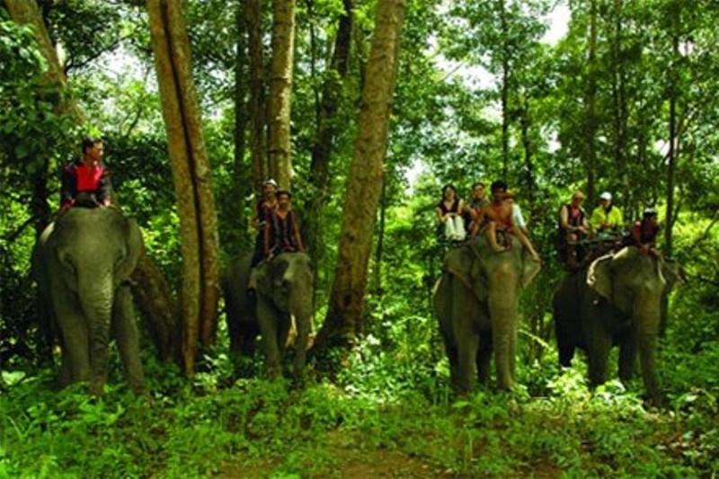 Cưỡi voi thăm thú vườn quốc gia Yok Đôn