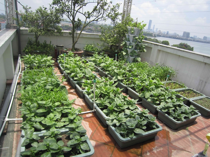 Mô hình trồng rau Vườn Tại Gia