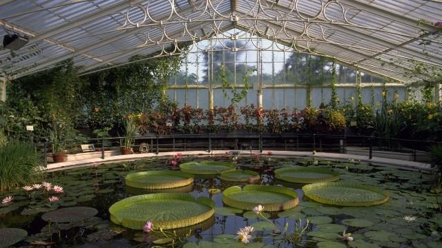 Bên trong vườn thực vật hoàng gia Kew