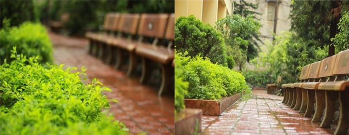 Vườn cây cảnh được sinh viên Tài Chính gọi bằng cái tên thân thương