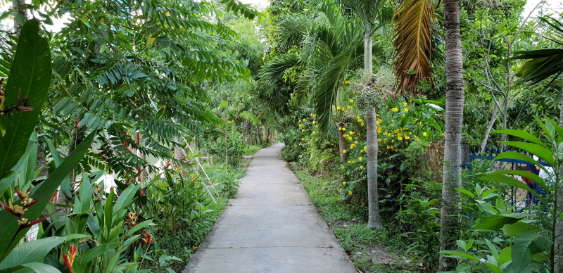Con đường trong khu vườn rộng hơn 2ha