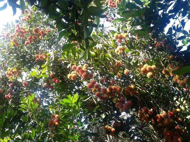 Vườn trái cây Ba Ngói