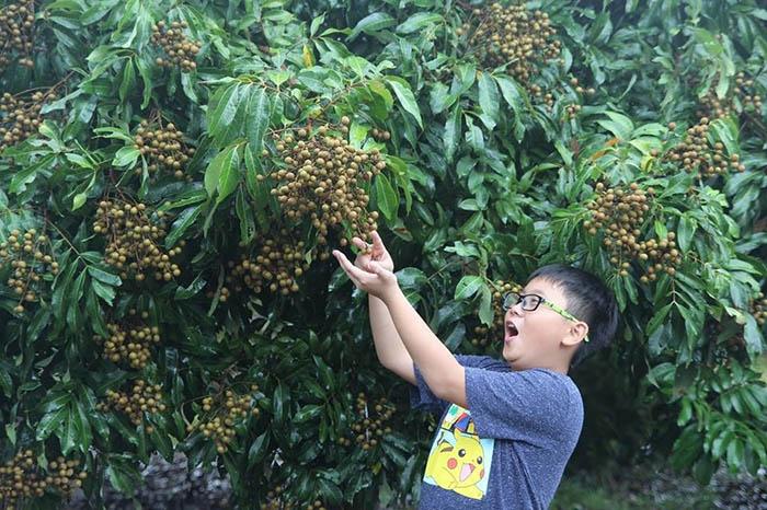 Vườn trái cây Cái Mơn