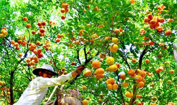 Khu vườn trái cây nổi tiếng nhất nhì Tây Ninh