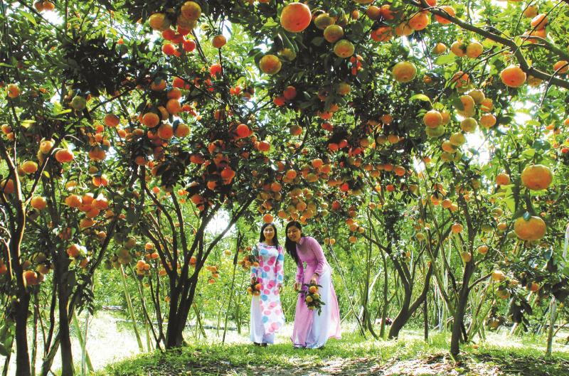 Top 4 Vườn trái cây hấp dẫn ở Tây Ninh - Toplist.vn