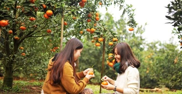 Vườn trái cây Long Khánh