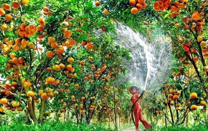 Vườn trái cây Ba Láng thuộc phường Ba Láng, quận Cái Răng, thành phố Cần Thơ