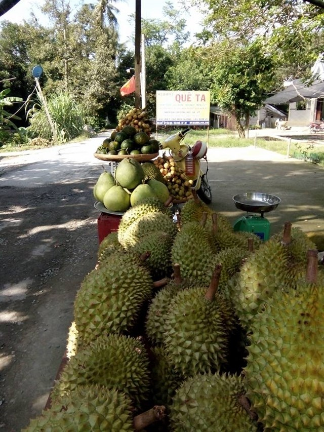 Ngoại chôm chôm còn nhiều lại hoa quả nữa tại miệt vườn Quê Ta