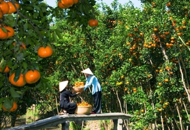 Vườn trái cây Mỹ Khánh nằm trong khu du lịch Mỹ Khánh