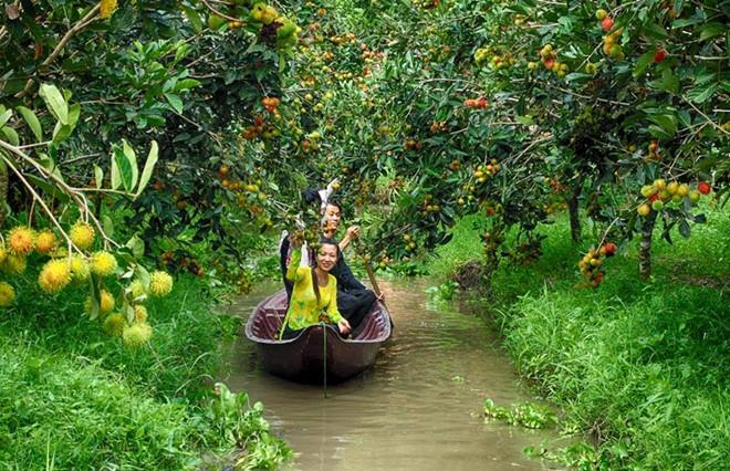 Vườn trái cây Phong Điền mệnh danh là