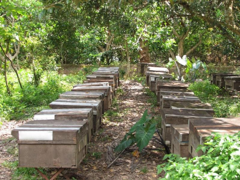 Khu nuôi ong tại vườn trái cây Tám Lộc