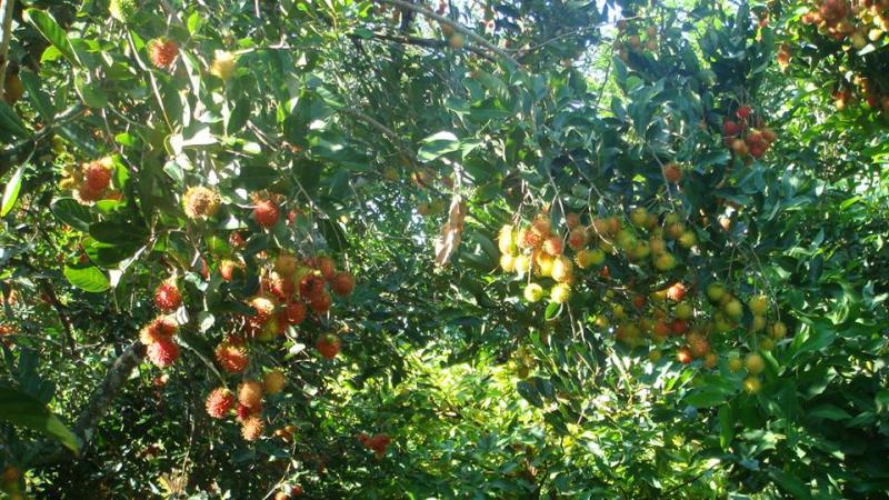 Vườn trái cây Tám Lộc