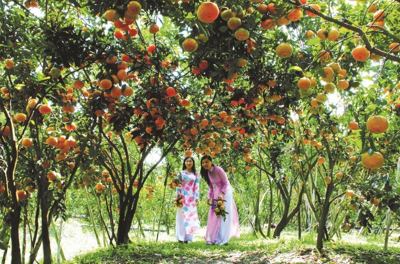 Vườn Trái cây Vàm Xáng là một trong những vườn trái cây tư nhân lớn nhất tại Cần Thơ