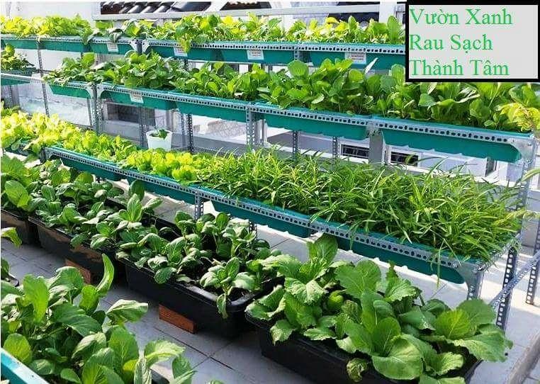 trồng rau sạch tại nhà hcm