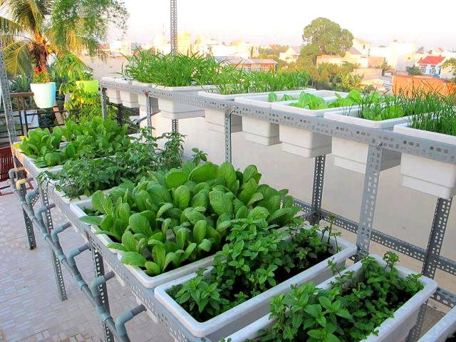 đất trồng rau sạch tại nhà hcm