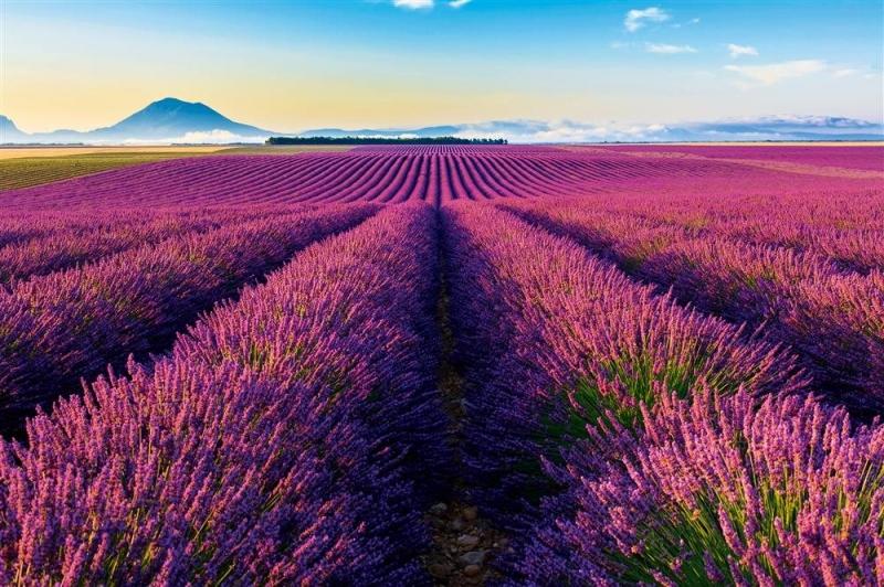 Chiều nhẹ nhàng, yên bình nơi cảnh đẹp như quyến luyến bước chân