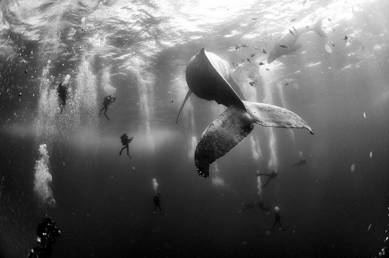 Bức ảnh Whale Whisperers  của nhiếp ảnh gia Anuar Patjane Floriuk - Nguồn Internet
