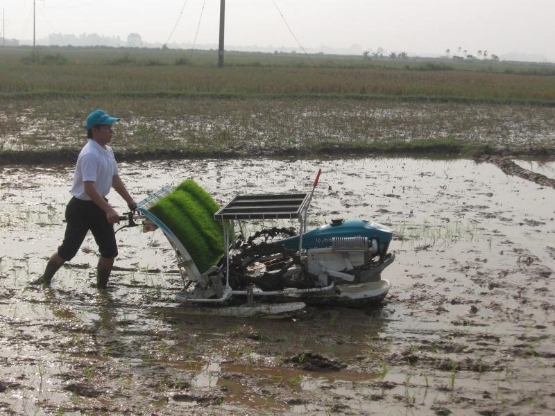 Xã Tân Hưng tích cực đổi mới sản xuất nông nghiệp