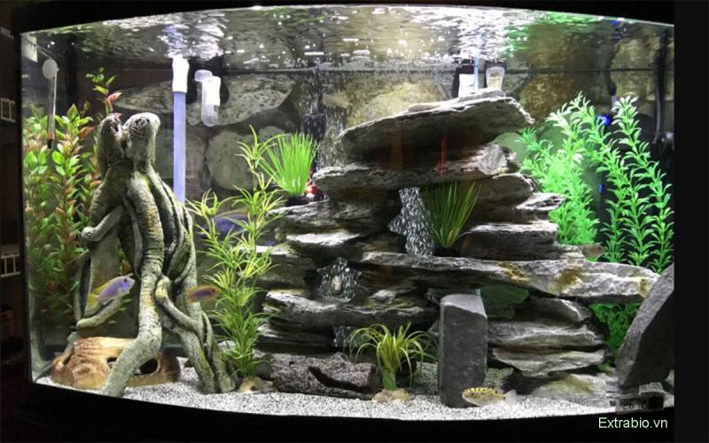 Nếu nhà bạn chật hẹp, bạn hoàn toàn có thể mua hồ kính để nuôi cá.