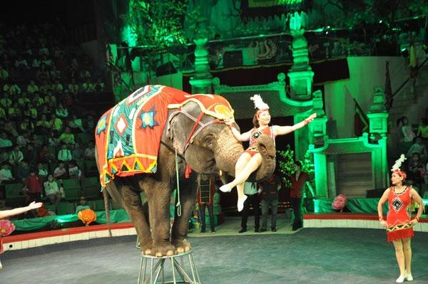 Xiếc voi mang lại giây phút thư giãn tuyệt vời cho bé yêu của bạn