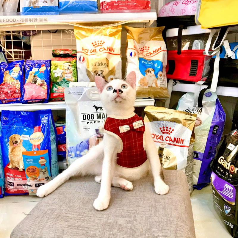 Xu Bông Pet Shop Đà Nẵng