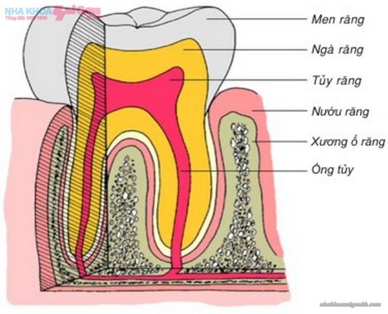 Lớp men răng cứng hơn cả thép