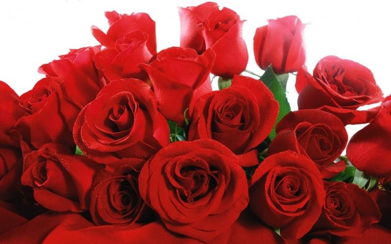 Hoa hồng tượng trưng cho tình yêu mãnh liệt