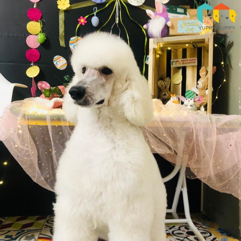 Yuppy Puppy - Khách Sạn & Spa Thú Cưng